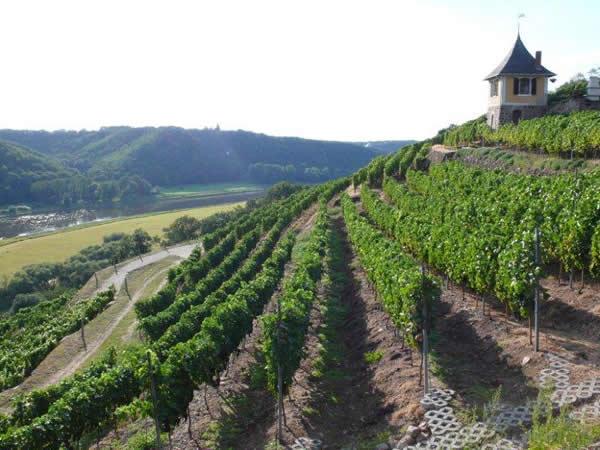 Weinberge im Spaargebirge